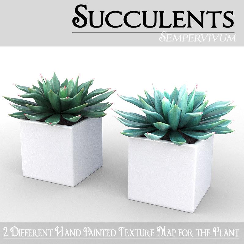 3d model succulent potted plant