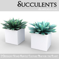 3d model succulent potted plant