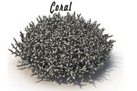 sea corals 3d model