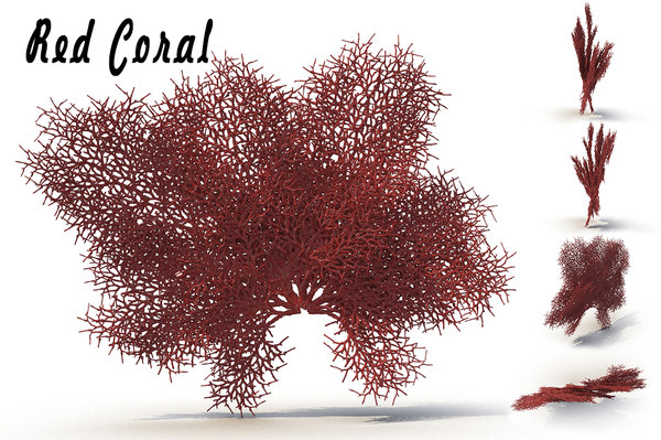 3d sea corals red model