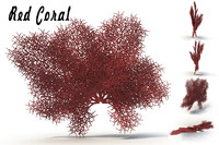 3d sea corals red model