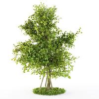 bush plexus 3d model