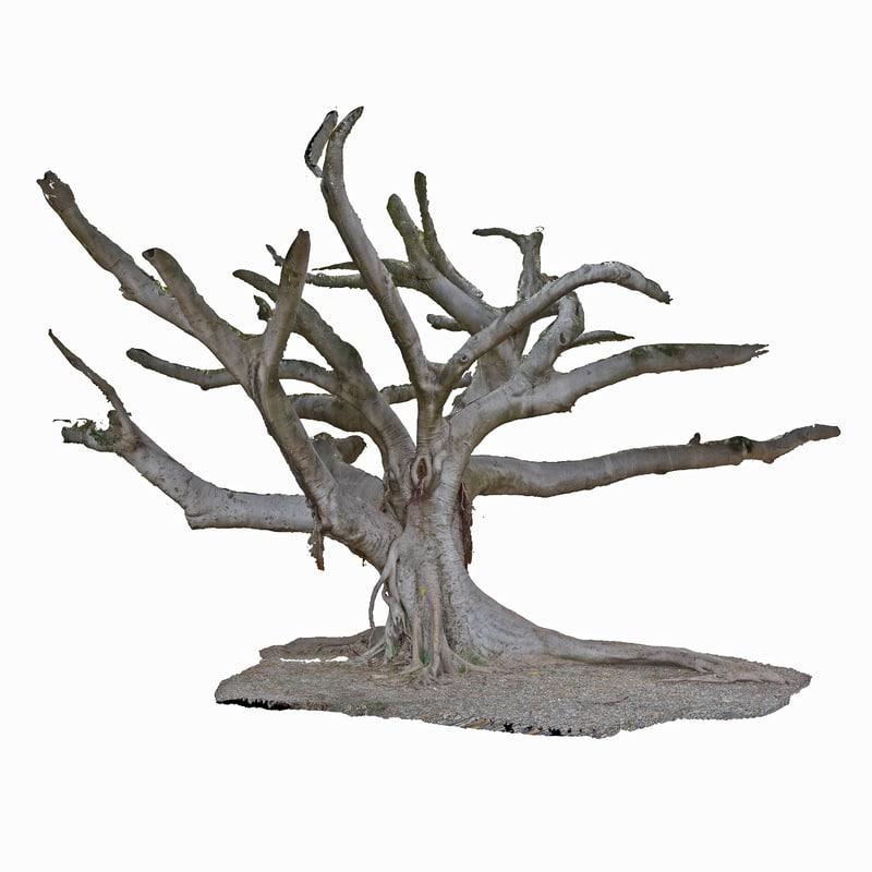 3d tree trunk ficus scanned