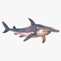 3d max rigged hammerhead shark