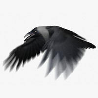 house crow animation flying 3d model