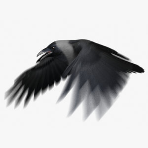 3d model house crow animation flying