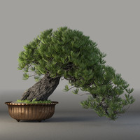 max bonsai tree