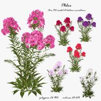 3d model phlox flower