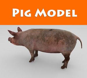 pig ready 3d model