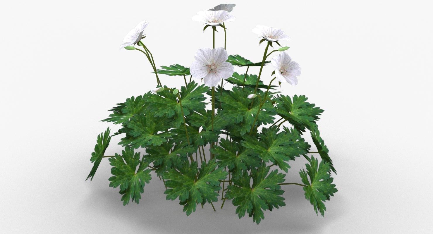 3ds garden perennial geranium flowers