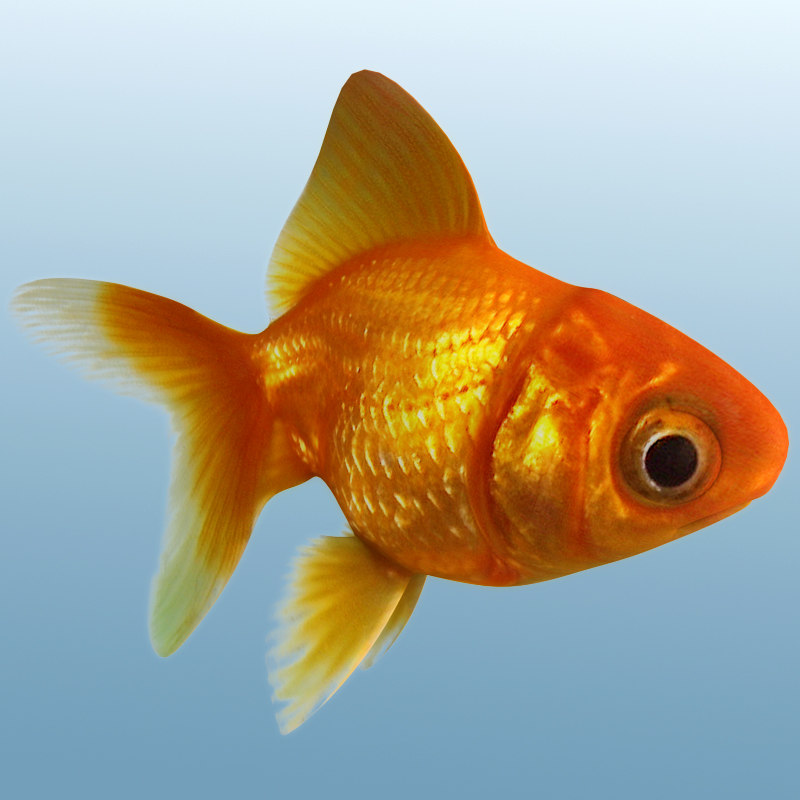 3d max golden fish