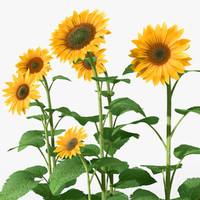 3d sunflowers plants