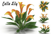 max calla lily