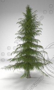 3d cedar tree