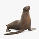 sea lion 3D models