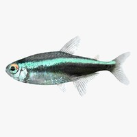 realistic neon tetra 3d 3ds