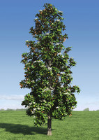 3d magnolia tree leafs model