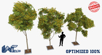 3d model optimized trees