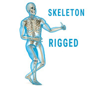 3d human skeleton body rigged model
