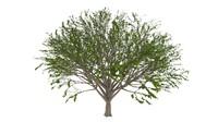 tree 3d c4d