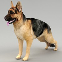 3d german shepherd dog polys model
