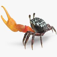 max calling crab fighting pose