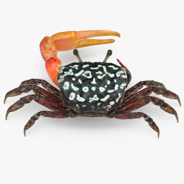 fiddler crab fur 3d model