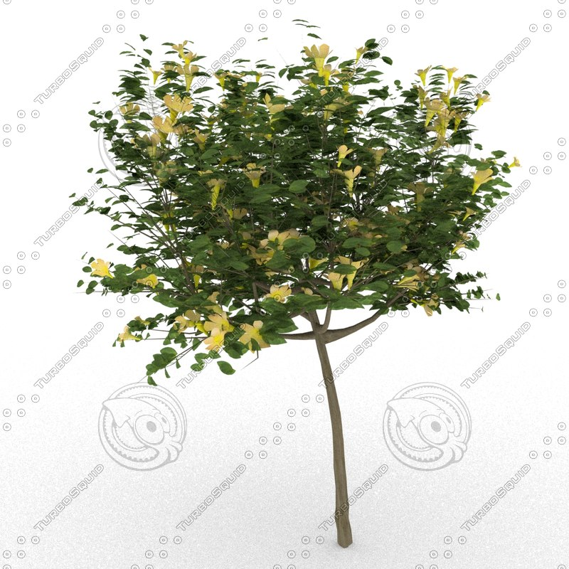 allamanda cathartica tree 3d model