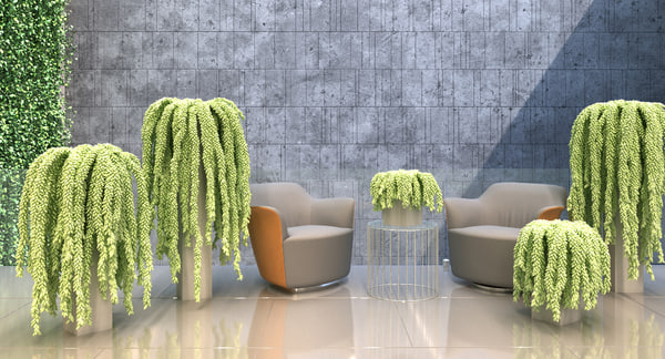 2 plants max