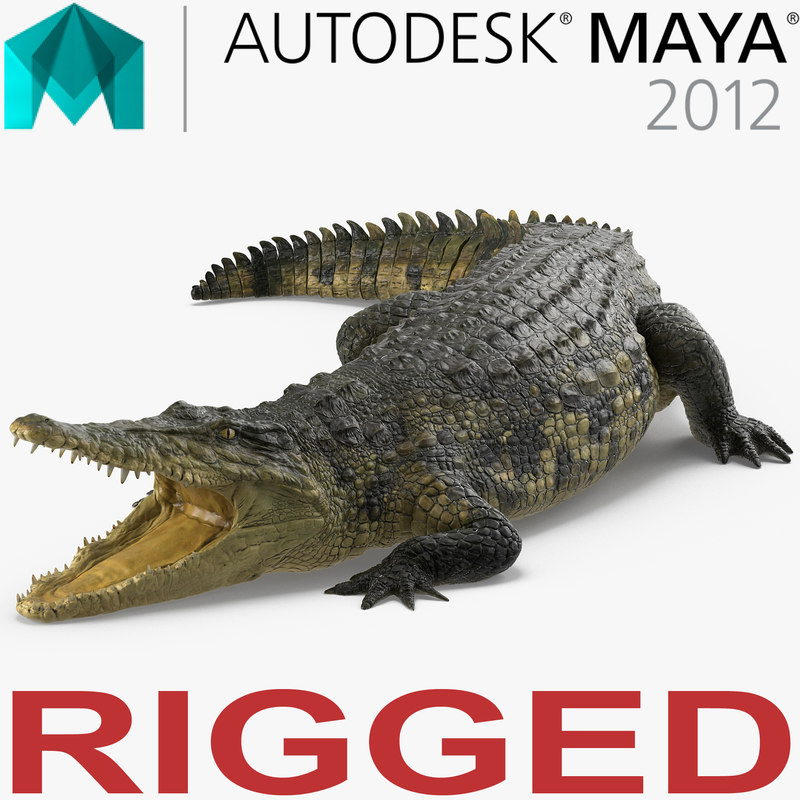 3d ma crocodile rigged