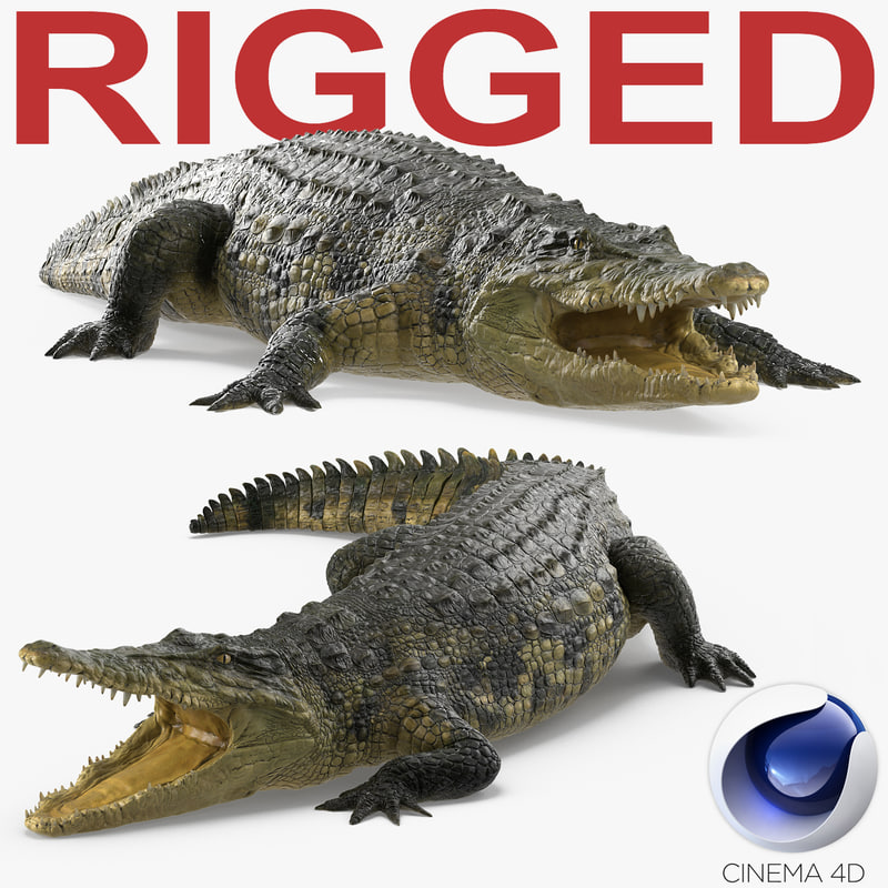 Crocodile Rigged for Cinema 4D 3D Model