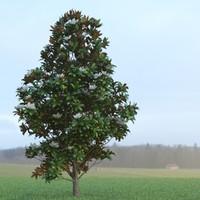 magnolia tree leafs 3 max