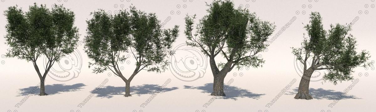 olive tree pack olea max