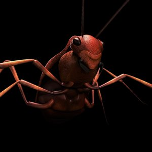 rigged bug insect 3d model