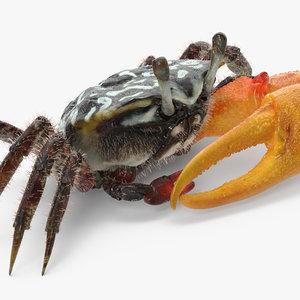 3d fiddler crab sitting pose model