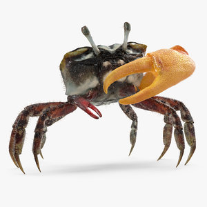3d fiddler crab standing pose model