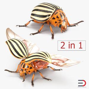 obj colorado potato beetle