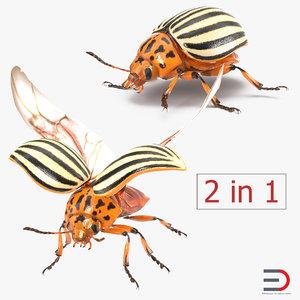 3d colorado potato beetle rigged