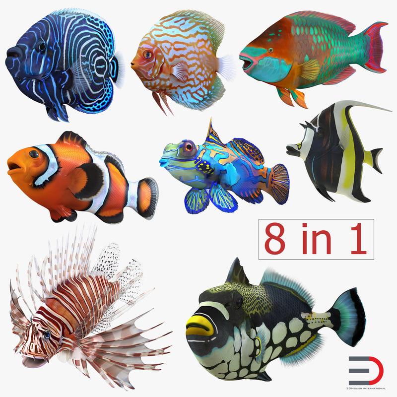 3d coral fishs 2 clownfish