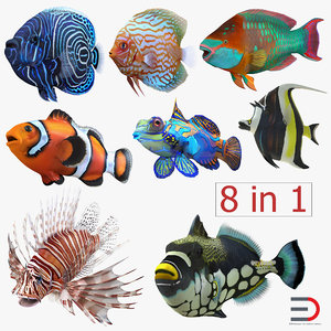 3d coral fishs 2 clownfish