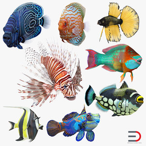 3d coral fishs 2 rigged