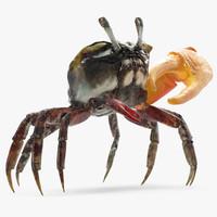 calling crab standing pose 3d model