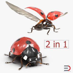 3d max ladybug set flying