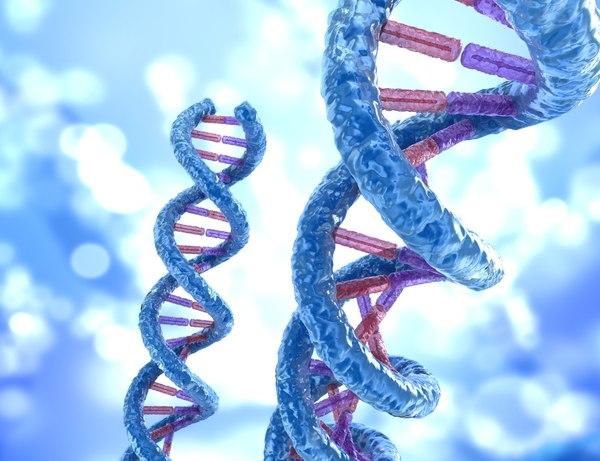 dna molecule concept human anatomy 3d max