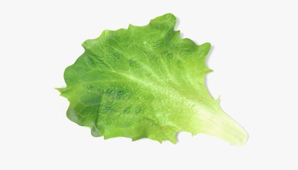 lettuce 3d 3ds