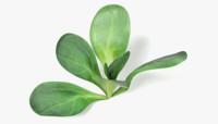 3d model lettuce