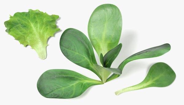lettuce set 3d model