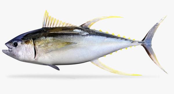 yellow fin tuna 3d fbx