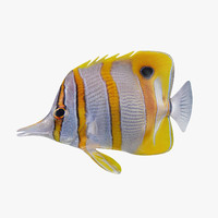 copperband butterflyfish 3d max