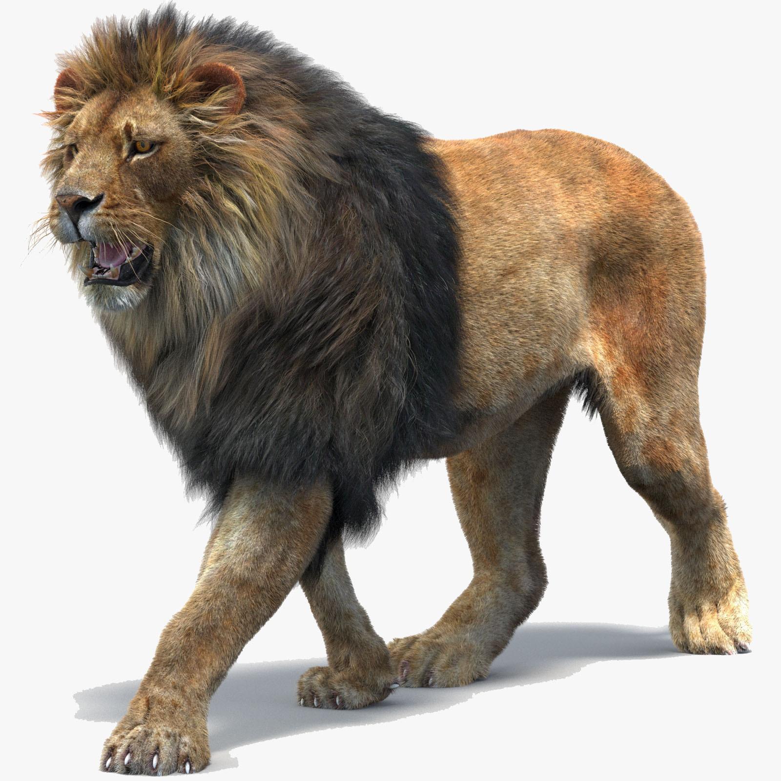 Lion-3d-Model-Fur-V-Ray-00.jpg